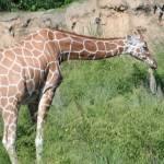 Zaria Grant Profile Picture